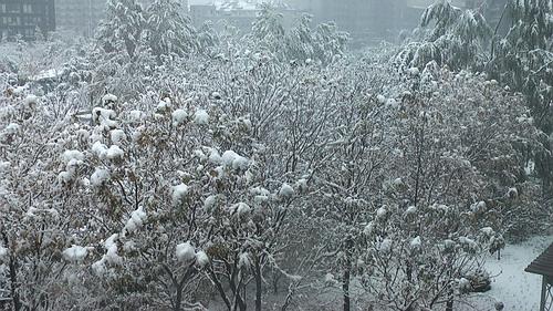 北京2009年11月1日迎接新年第一场雪 - sz1961sy - 沈阳(sz1961sy)的网易博客
